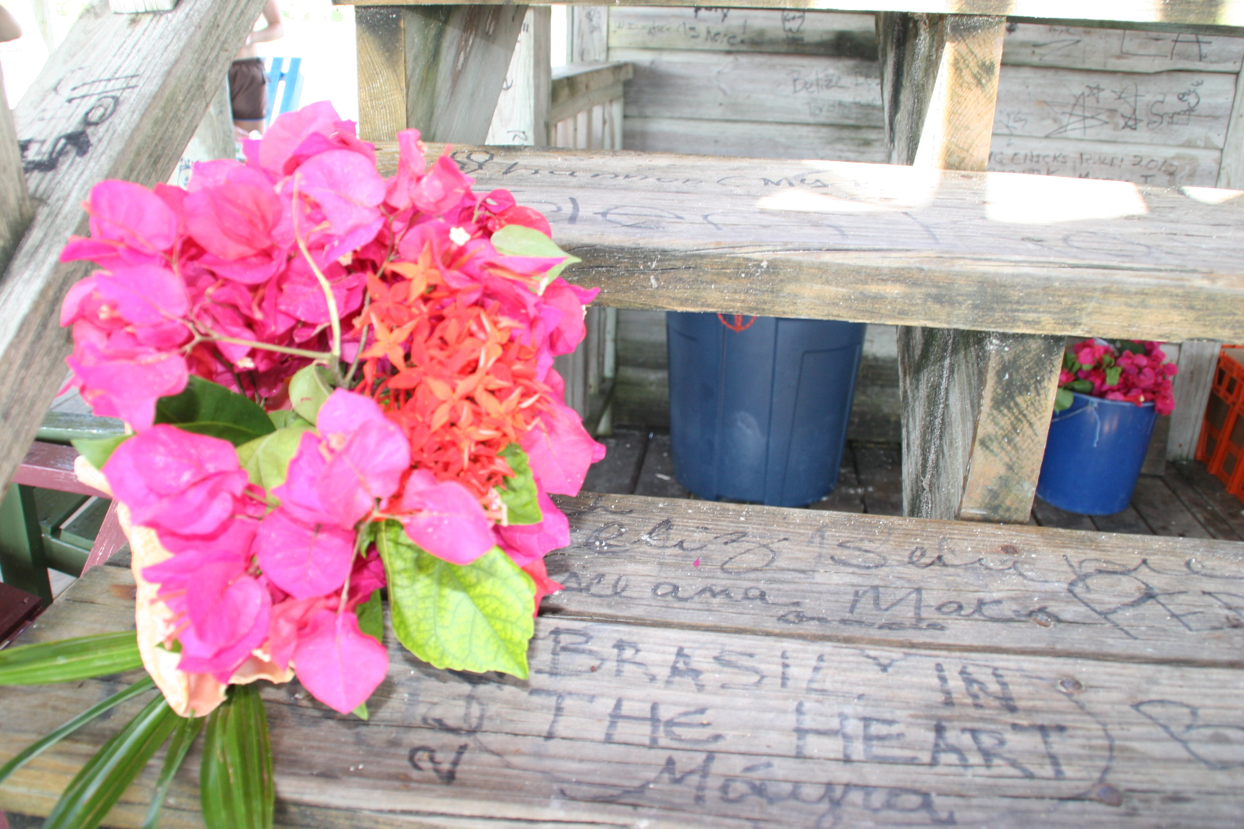 Flowers Ive Seen