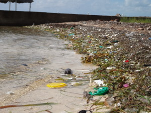 trash collecting in the seawall corners. certainly rather quickly
