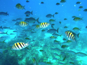Belize Snorkeling trip with event and vacation planner romantictravelbelize.com