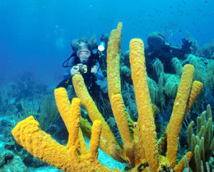 Belize Scuba Diving certification with travel agent romantictravelbelize.com